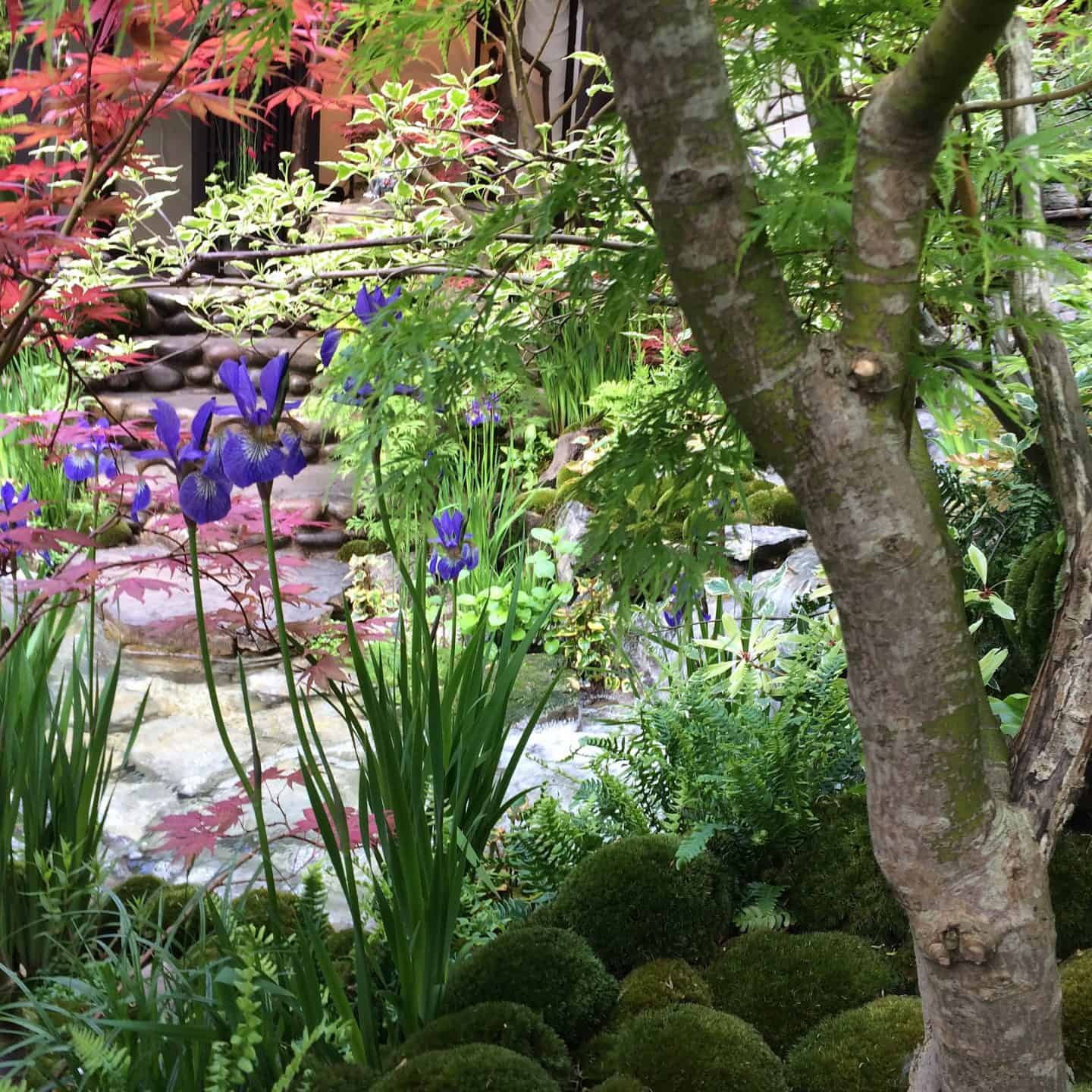 EdoGarden at Chelsea Flower Show