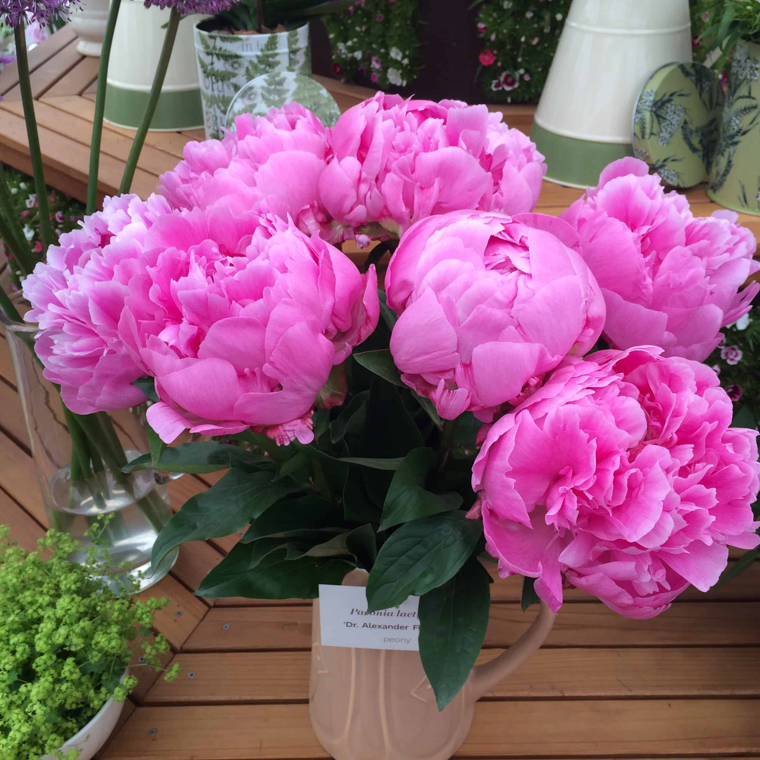 Peonies at Chelsea Flower Show