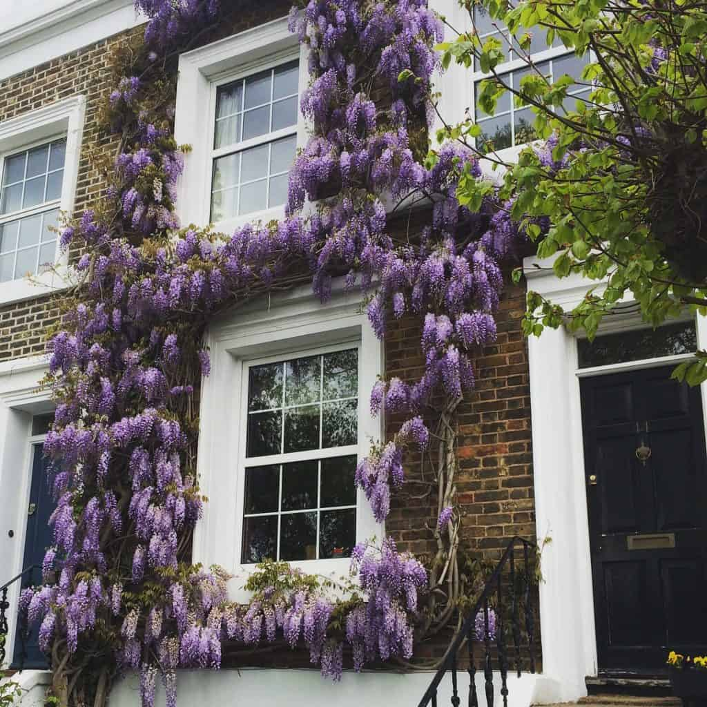 Climbing wisteria is pretty but will it define where to live in London for your expat move