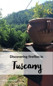 near Lucca | Italy - Discovering fireflies in Tuscany