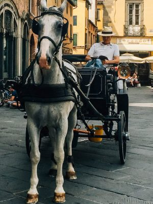 lucca horse ride - lucca tuscany things to do