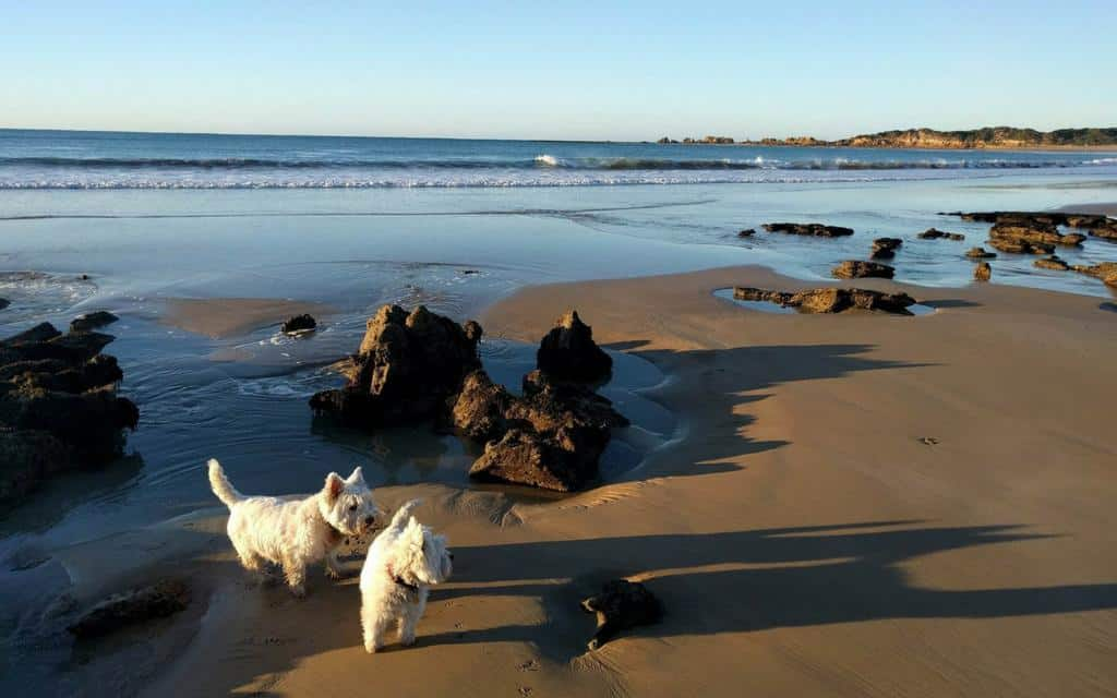 dogs on the beach at Point Roadknight on the Great Ocean Road