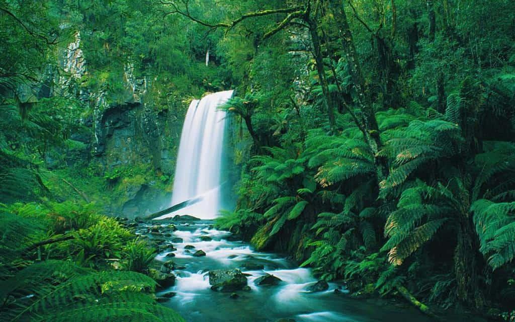 Hopetoun Falls Elle ID AU - Great Ocean Road tour
