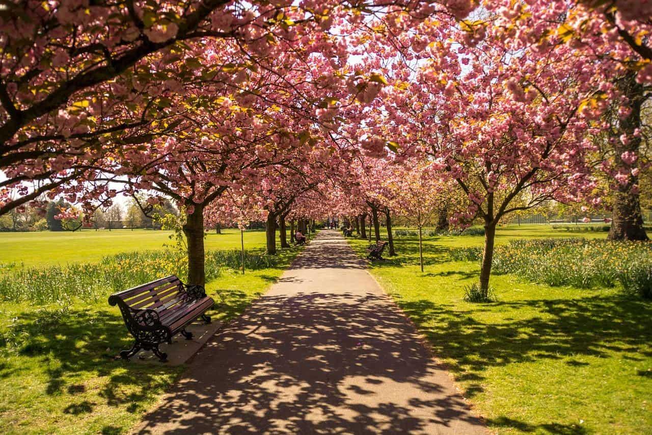 royal greenwich park london