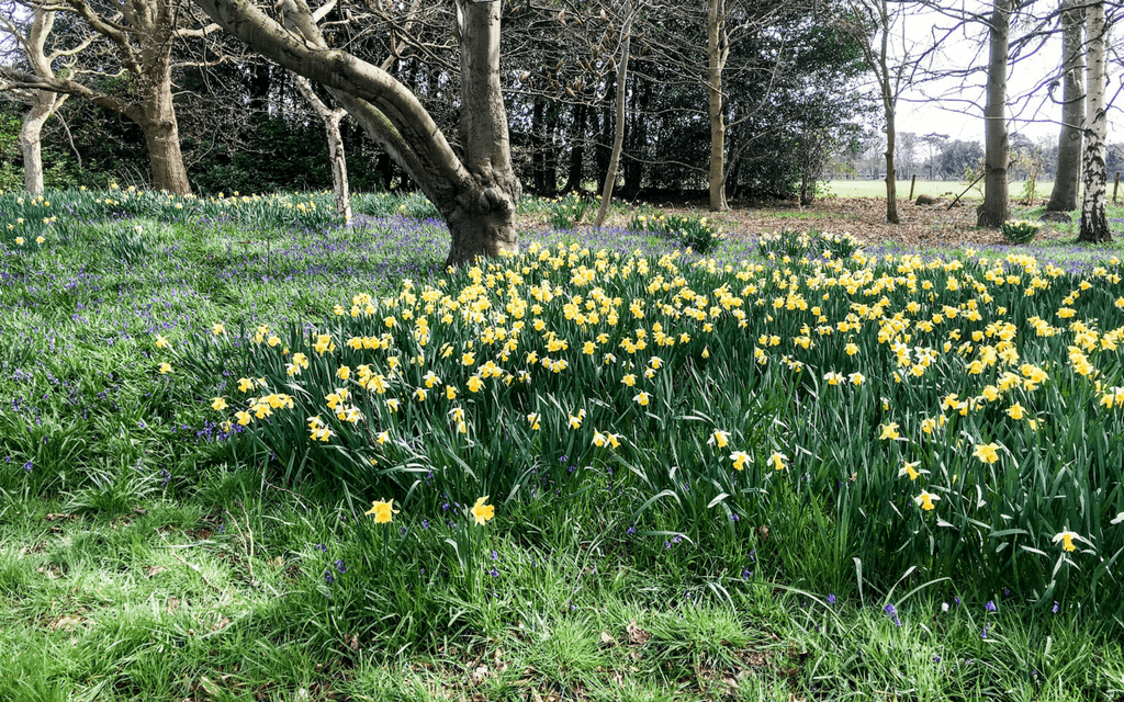 Suffolk countryside near Sutton Hoo