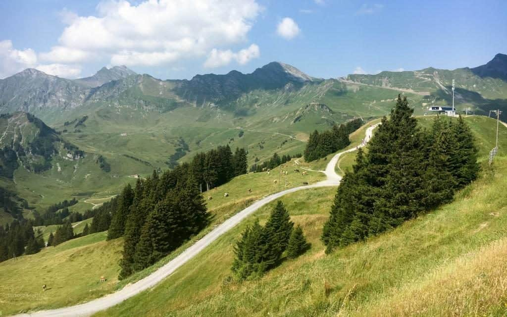 lush green pastures to walk across in the swiss alps