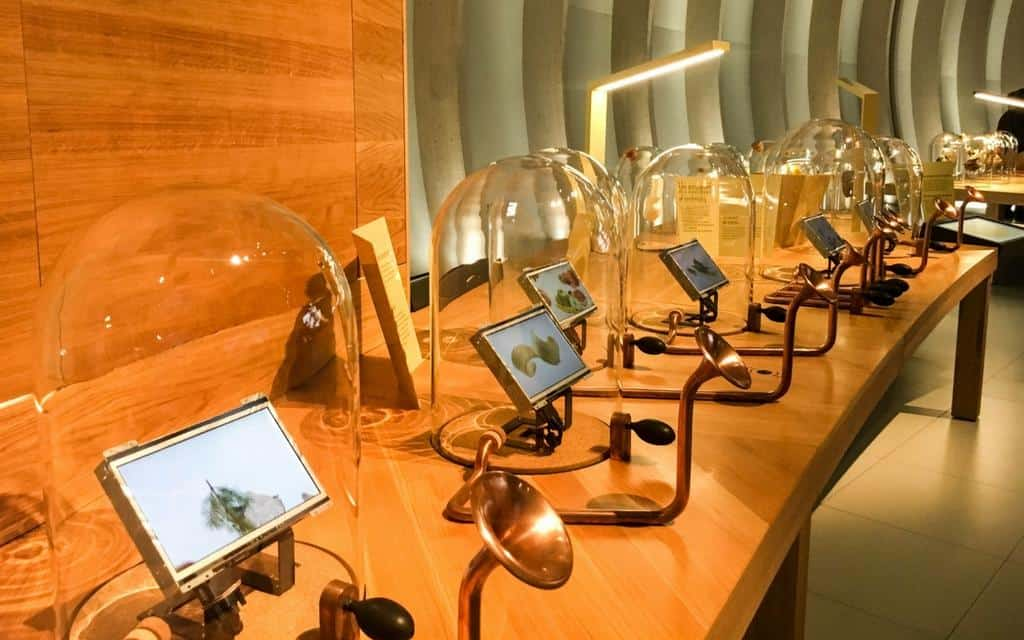 Museum of wine Bordeaux - sensory experience