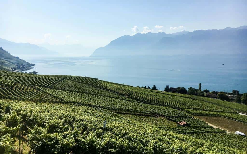 view of Lake Geneva across the vines