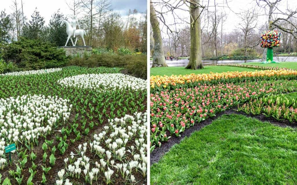 flower beds at keukenhof - tulip season amsterdam
