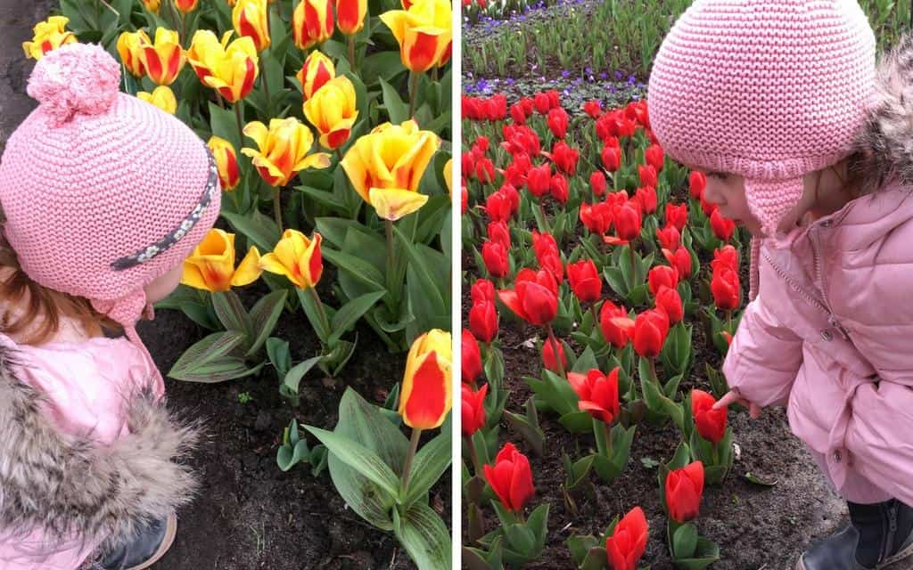 smelling the flowers at keukenhof