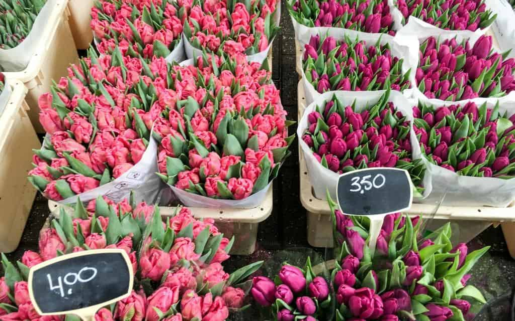 tulips for sale in amsterdam flower garden