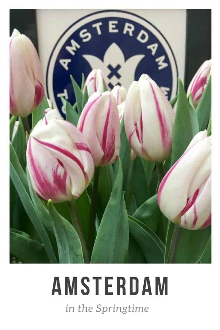 Visit Amsterdam in Spring - for tulips, boats and cake