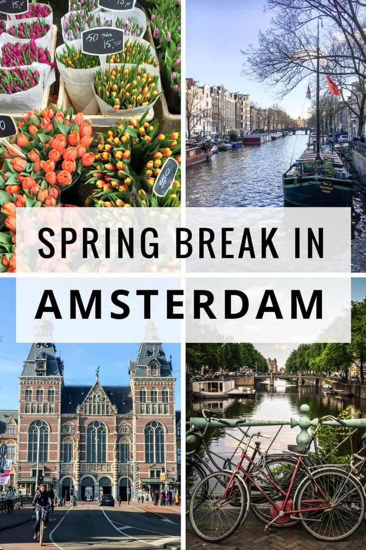 Amsterdam travel guide - things to do in Amsterdam in the Springtime