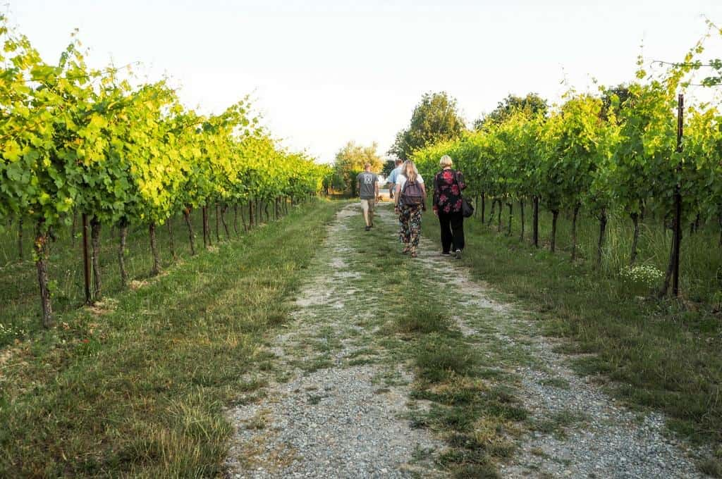 Enjoying a walk with friend in the vineyards