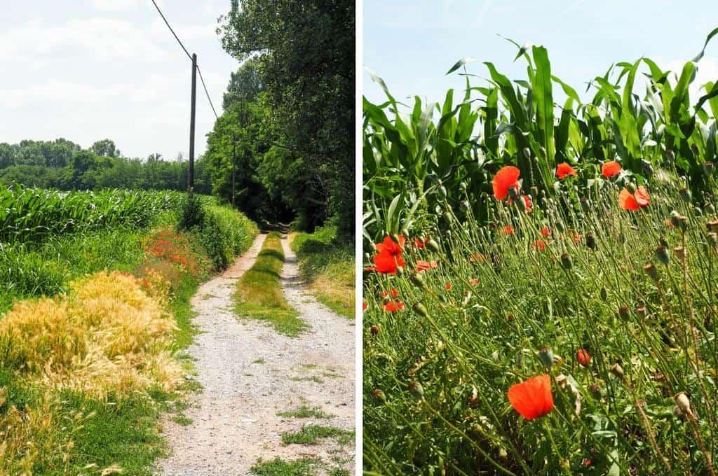 Fields in Brescia Italy