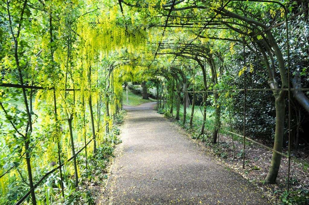Laburnum Walk Richmond Park - popular parks in london