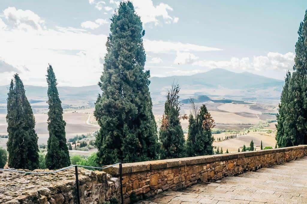 Tuscan cypress Pienza