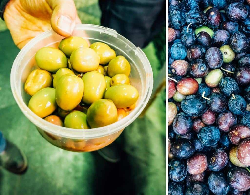 spanish olives seville