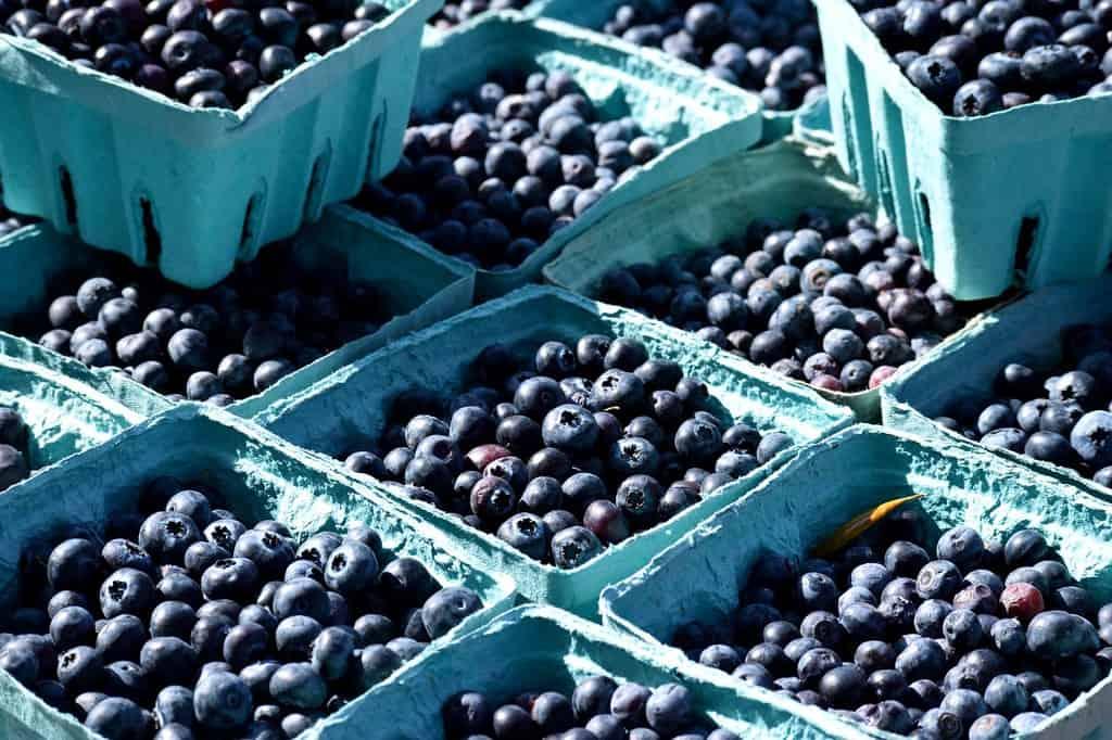 bilberries iceland food summer