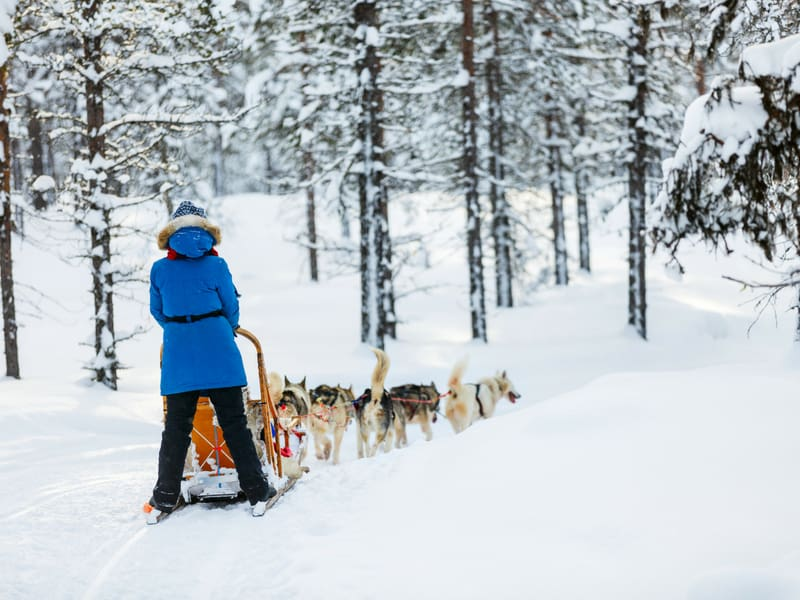 finland vacation ideas - husky sledding