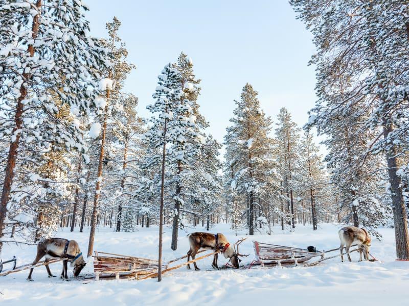 visit finland ideas - reindeer