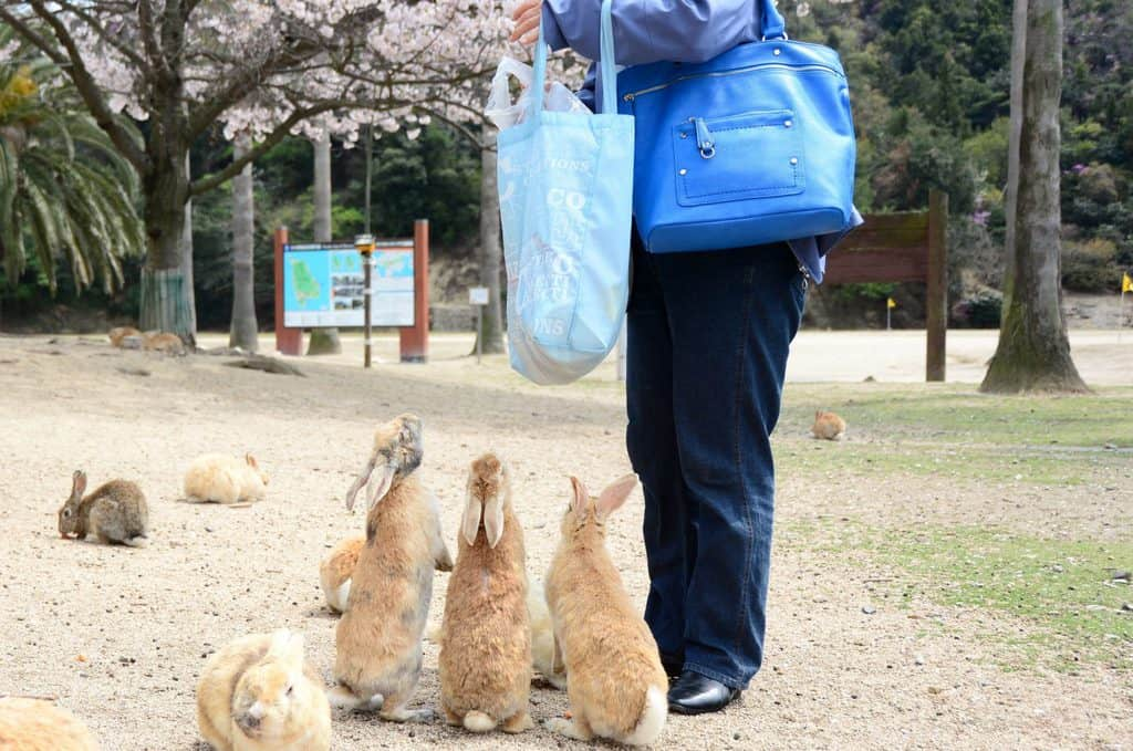 japan rabbit island - where to go with kids in japan