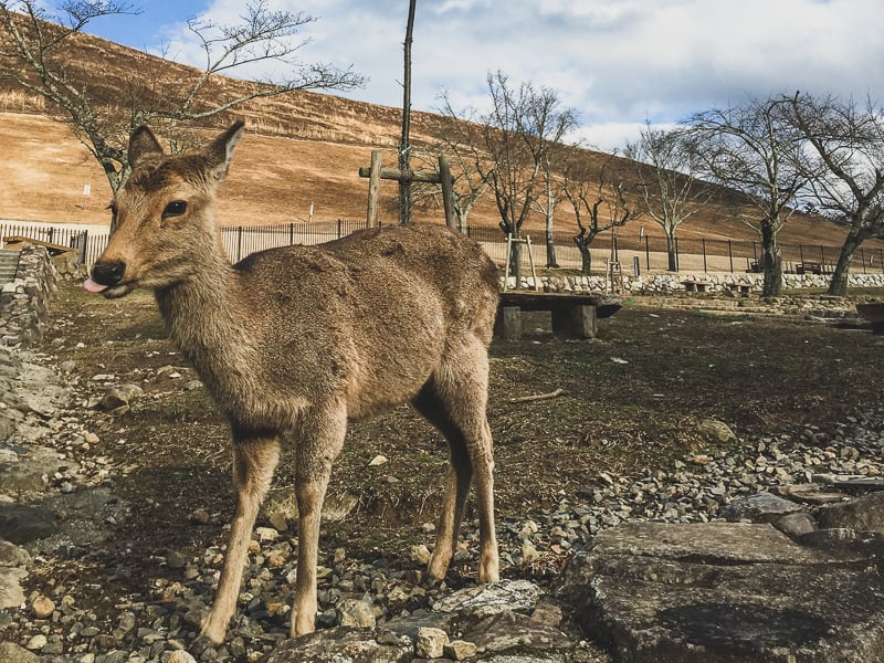 nara japan - where to go with kids in japan