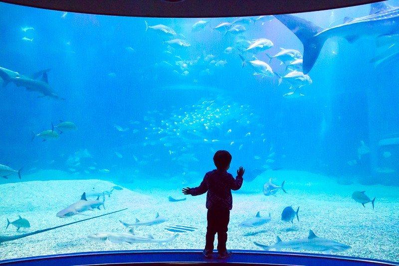 osaka aquarium - japan top attractions for kids