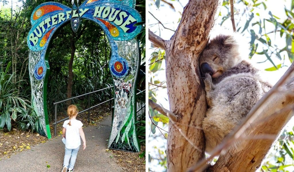 melbourne zoo - family outings melbourne