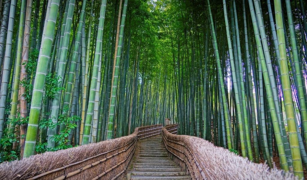 arashiyama - 48 hours in kyoto